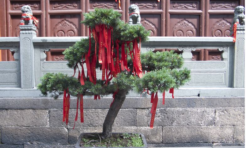 Tree with wish markers @ Temple of Jade