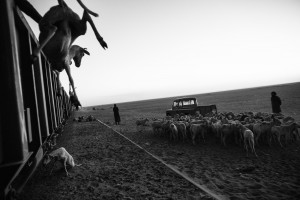 Zouarete, Mauritania - 21 January, 2016:Removing the goats of the wagons at the end destination in Zouarete.The Iron Train is one of the longest train in the world, the train is about 2.5 km. A journey that goes from Nouadhibouh to Zouerate, totaling 652 km in the middle of the Sahara desert that lasts about 20 hours. An epic journey where residents, poor and penniless use dangerous train to visit relatives in the homeland or carrying goods such as live animals. High temperatures during the day and very low temperatures during the night makes the journey not easy. But the worst is the dust that is produced by wagons full of iron minerals that come from a mine from 30km of Zouarate to be unloaded in cargo boats in the port of Nouadhibouh.CREDIT: Daniel Rodrigues
