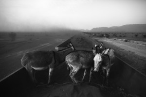 Zouarete, Mauritania - 24 January, 2016:Donkeys on the wagons full of iron mineral with final destination the city of Nouadhibou.The Iron Train is one of the longest train in the world, the train is about 2.5 km. A journey that goes from Nouadhibouh to Zouerate, totaling 652 km in the middle of the Sahara desert that lasts about 20 hours. An epic journey where residents, poor and penniless use dangerous train to visit relatives in the homeland or carrying goods such as live animals. High temperatures during the day and very low temperatures during the night makes the journey not easy. But the worst is the dust that is produced by wagons full of iron minerals that come from a mine from 30km of Zouarate to be unloaded in cargo boats in the port of Nouadhibouh.CREDIT: Daniel Rodrigues