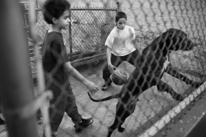 A dog jumps at passerbys on the road to St. Mary's park, 14 Apr 2016, Mott Haven, Bronx. St. Mary's is a recreational center home to weekly events for the community of Mott Haven.