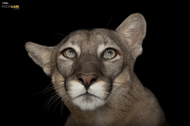 Photo © Joel Sartore/National Geographic Photo Ark