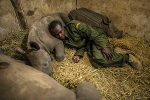 Yusuf, a keeper at the Lewa Wildlife Conservancy in Kenya sleeps among three baby rhinos. The calf he rested his head on was orphaned when poachers killed his mother 50 miles away. Much needed attention has been focused on the plight of wildlife and the conflict between heavily armed poachers and increasingly militarized wildlife rangers. But very little has been said about the indigenous communities on the front lines of the poaching wars and the incredible work they do to protect these animals. They hold the key to saving Africaís great animals.